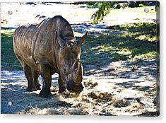 Thick Skinned Acrylic Print by Sarita Rampersad