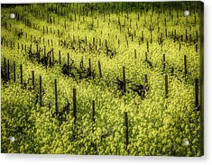 Thick With Mustard Grass Acrylic Print by Garry Gay