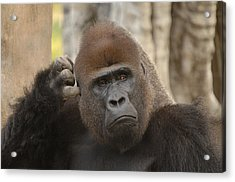 Think About It Acrylic Print by Keith Lovejoy