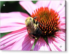 Acrylic Print featuring the photograph Think Bees by Paula Guttilla