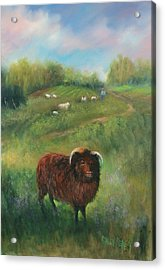 Thinking Of Ewe Acrylic Print by Sally Seago