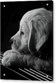 Thinking Of You Acrylic Print by Animus Photography