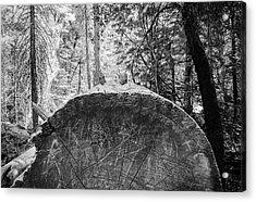 Thinking Tree- Acrylic Print