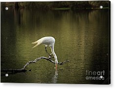 Acrylic Print featuring the photograph Thirst by Kim Henderson