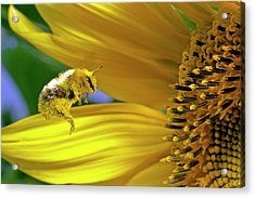 This Bee Needs A Bath Acrylic Print by David Freuthal