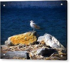 This Gull Has Flown Acrylic Print by John Freidenberg