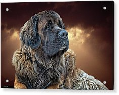 This Is Grizz Acrylic Print
