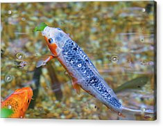 Acrylic Print featuring the photograph This Is Mine Fish by Raphael Lopez
