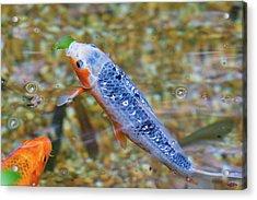 This Is Mine Fish Acrylic Print