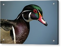 Acrylic Print featuring the photograph This Is My Good Side by Elvira Butler