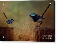 This Is My Perch Acrylic Print