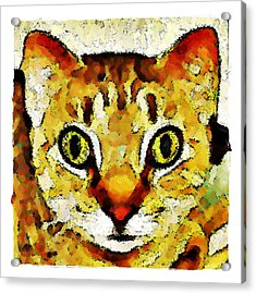 This Is My Surprised Face Kitty Acrylic Print by Terry Mulligan
