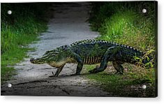 This Is My Trail Acrylic Print