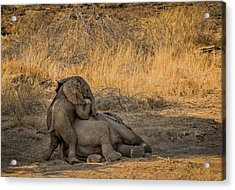 This Is Namibia No.  4 - Come On Bro I Wanna Play Acrylic Print by Paul W Sharpe Aka Wizard of Wonders