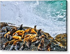 This Is Oregon State No.18 - Sea Lion Splash Acrylic Print by Paul W Sharpe Aka Wizard of Wonders