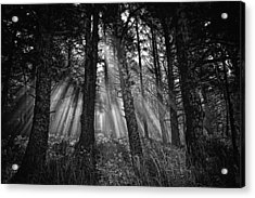 This Is Our World - No.1 - Forest Floor Morning Mist Bw Acrylic Print by Paul W Sharpe Aka Wizard of Wonders