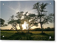 Acrylic Print featuring the photograph This One Is For You by Phil Mancuso