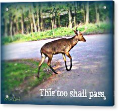 This Too Shall Pass Acrylic Print by Miriam Shaw