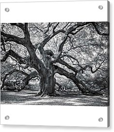 This Tree Is Located In Charleston Acrylic Print
