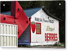 This Way For Strawberries Acrylic Print by David Lee Thompson
