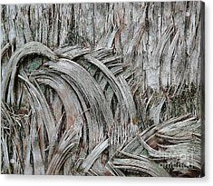 This Way 'n That Acrylic Print by Donna McLarty