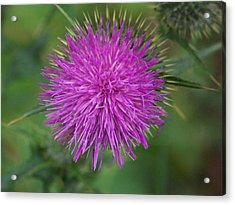 Acrylic Print featuring the photograph Thistle by Angi Parks