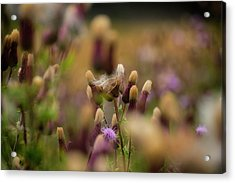 Acrylic Print featuring the photograph Thistle Babies by Jeremy Lavender Photography