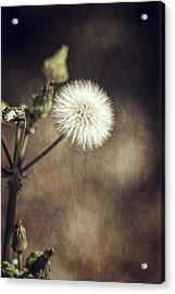 Thistle Acrylic Print by Carolyn Marshall