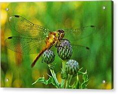 Thistle Dragon Acrylic Print by Michael Peychich