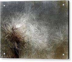Thistle Seed Acrylic Print