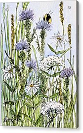 Thistles Daisies And Wildflowers Acrylic Print by Laurie Rohner