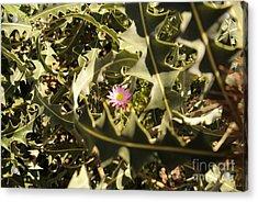 Thorn Love Acrylic Print by Oscar Moreno