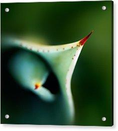Thorn Of Aloe Leaf Close-up Acrylic Print