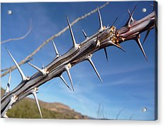 Acrylic Print featuring the photograph Thorns Along The Apache Trail by Joel Deutsch