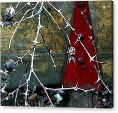 Thorns And Red Triangle Acrylic Print