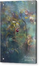 Thorns And Roses Acrylic Print by Agnieszka Mlicka