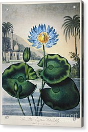 Thornton: Water Lily Acrylic Print by Granger