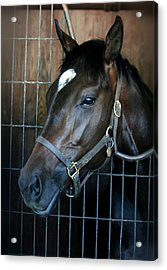 Acrylic Print featuring the photograph Thoroughbred by Cathy Harper