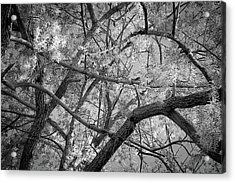 Those Branches -  Acrylic Print