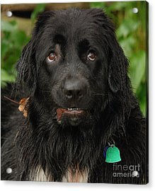 Acrylic Print featuring the photograph Those Eyes by Debbie Stahre