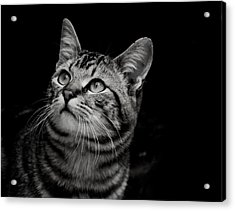 Acrylic Print featuring the photograph Thoughtful Tabby by Chriss Pagani