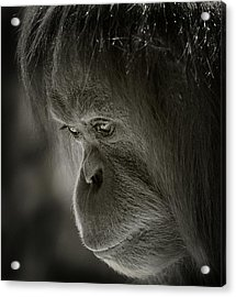 Thoughts Acrylic Print by Animus Photography