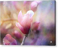 Thoughts Of Flowers Acrylic Print