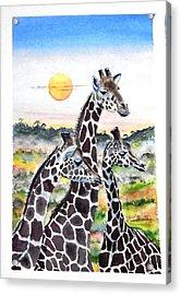 Three Giraffes    Sold Acrylic Print by Richard Benson