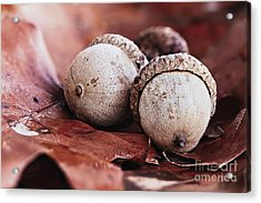 Acrylic Print featuring the photograph Three Acorns And Autumn Oak Leaves by Stephanie Frey