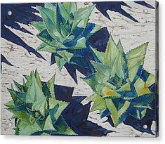 Three Aloe Acrylic Print by Karen Doyle
