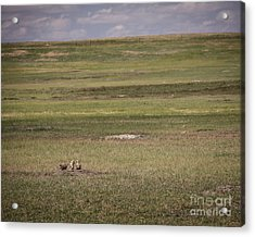 Three Amigos Acrylic Print by Sandy Adams