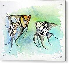 Three Anglefish Acrylic Print