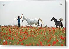 Three At The Poppies' Field Acrylic Print by Dubi Roman