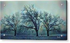 Three Bare Trees Acrylic Print